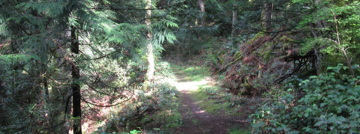 Salt_Spring_Island_Tour_Hike_Day_Trip_Forest_Walk_